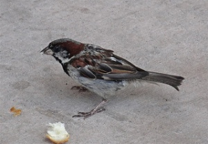 Small Bird Sparrow Bread